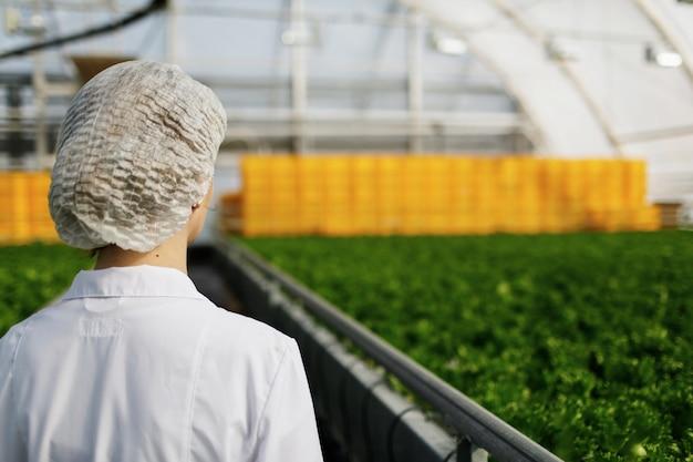 Ingeniera de biotecnología examinando plantas para detectar enfermedades