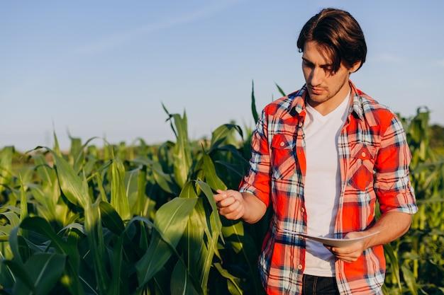 El ingeniero agrónomo toma el control del rendimiento del maíz y toca una planta.