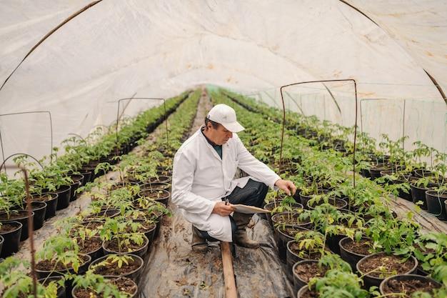 Ingeniero agrónomo en uniforme blanco con portapapeles y control de tomate mientras se agacha en vivero.