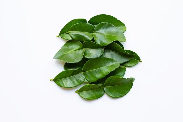 Ingrediente fresco de la hierba de las hojas de la cal del cafre de la bergamota aislado en el fondo blanco.