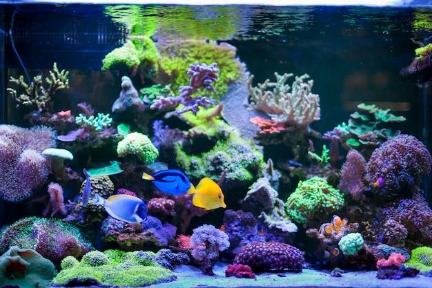 Inicio acuario de arrecife de coral