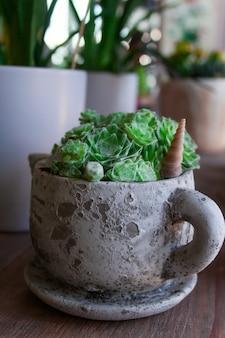 Inicio planta suculenta en maceta en taza de cerámica gris
