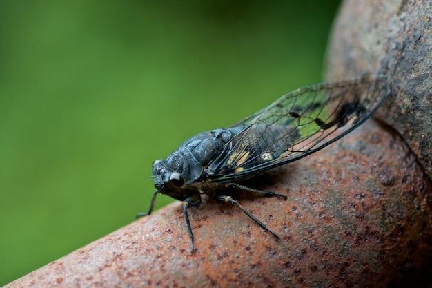 Insecto con alas en un árbol