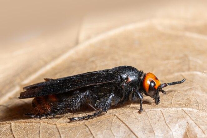 Insecto macro en hoja seca