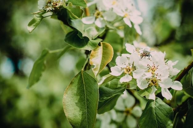 Insecto está sentado en la flor del árbol