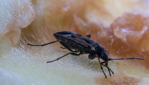 Insecto se sienta en una manzana