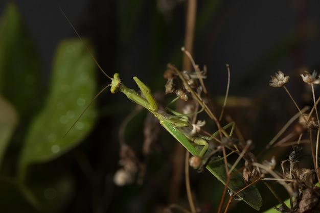 Insecto verde con alas de red en un entorno natural