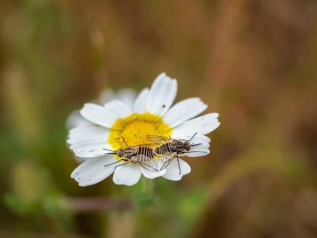 Insectos en una margarita