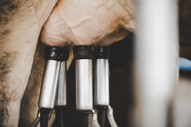 Instalación de ordeño de vacas y equipo de ordeño mecanizado.