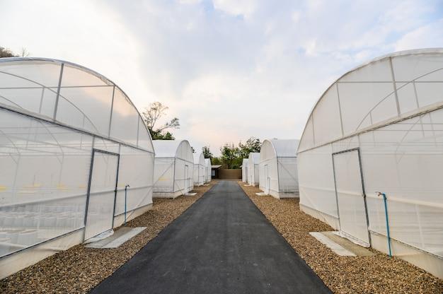 Invernadero blanco de cultivo de hortalizas.