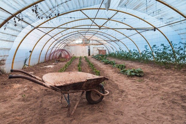 Invernadero de plantas y una vieja carretilla