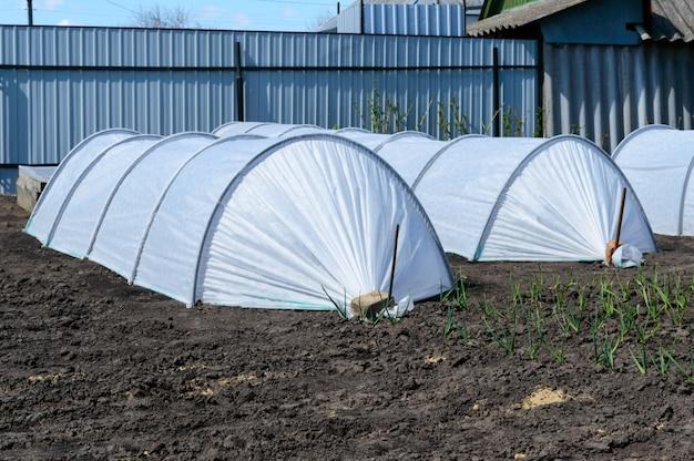 Invernaderos de jardín en forma de arcos cubiertos de fibra. jardín. tecnología de cultivo de hortalizas y verduras. casa. pueblo.