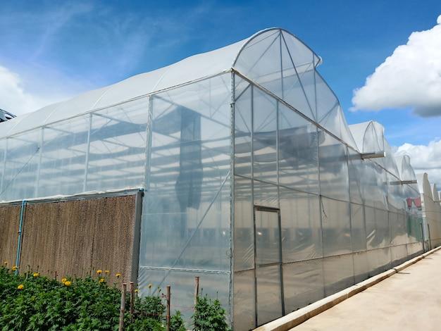 Invernaderos que cultivan hortalizas
