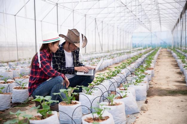 Investigador agrícola con la tableta inspeccionar lentamente las plantas.