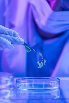 Investigador en el laboratorio de biotecnología con placa de petri y planta