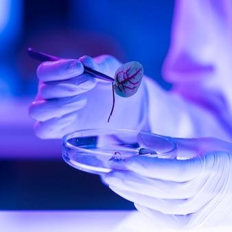 Investigador en el laboratorio con placa de petri y hoja.