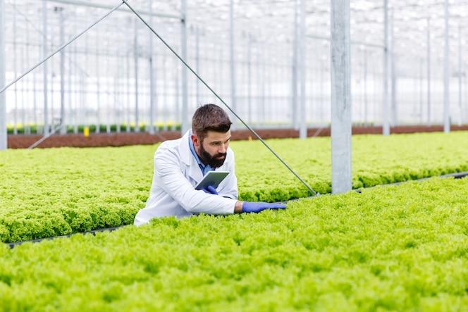 Investigador masculino barbudo estudia plantas con una tableta de pie en el invernadero