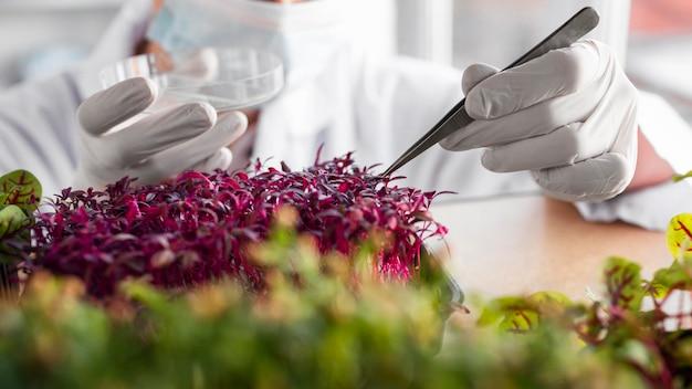 Investigador con planta y placa de petri en el laboratorio de biotecnología