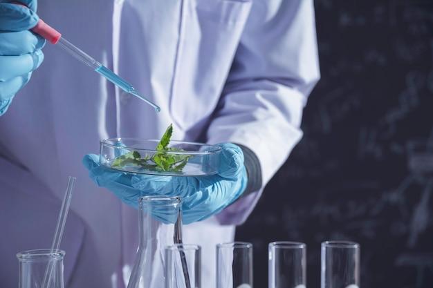 Investigador con tubos de ensayo químicos de laboratorio de vidrio con líquido para investigación analítica, médica, farmacéutica y científica.