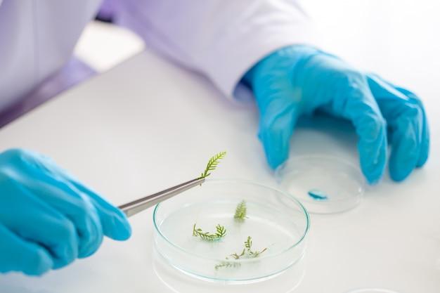Investigadores estudian especies de plantas.