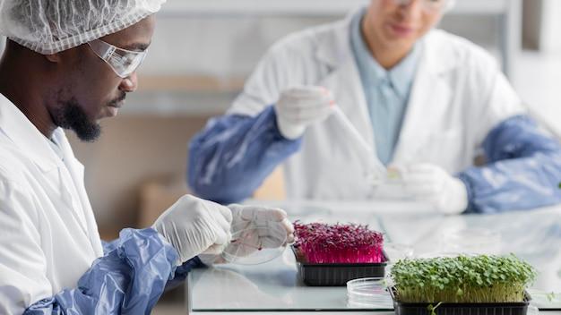 Investigadores en el laboratorio de biotecnología con plantas