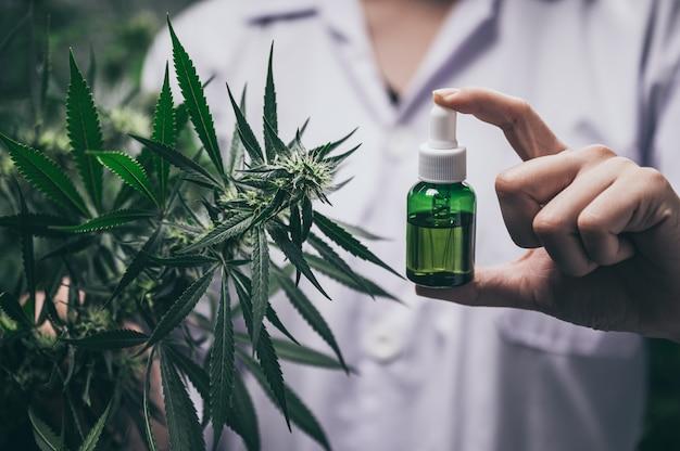 Investigadores profesionales que trabajan en un campo de cáñamo, están revisando plantas, medicina alternativa y concepto de cannabis.