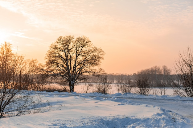 Invierno poco despejado camino. camino en el campo cubierto de nieve. paisaje invernal con ventisqueros