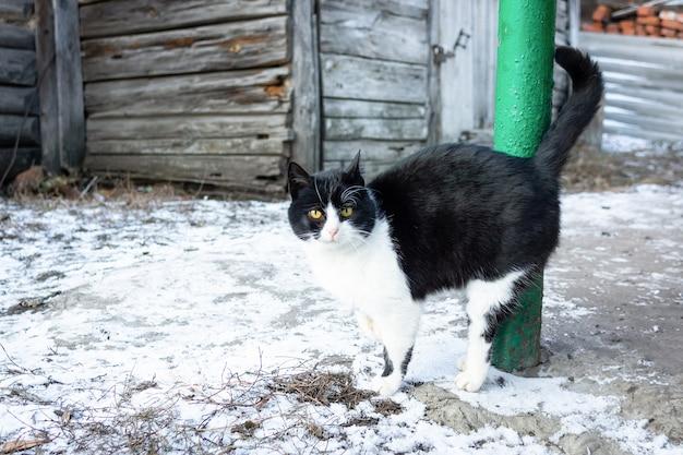 Invierno pueblo de gatos