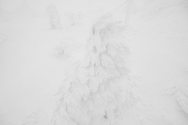 Invierno yamagata nevado árbol japonés