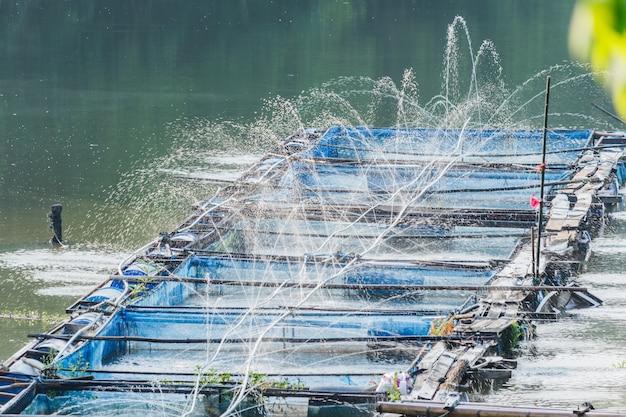 Inyección de agua, oxígeno en las granjas de tilapia del nilo