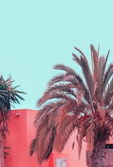 Isla canario. vibraciones creativas de palm. plantas en concepto rosa