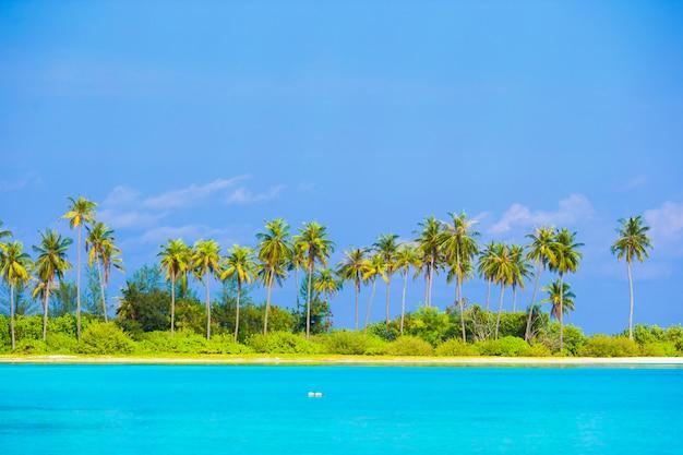 Isla perfecta con playa blanca, agua turquesa y palmeras verdes.