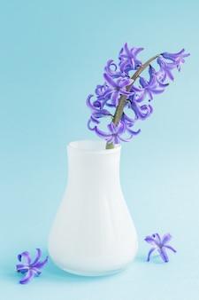 Jacinto floreciente hermoso en florero de cristal blanco