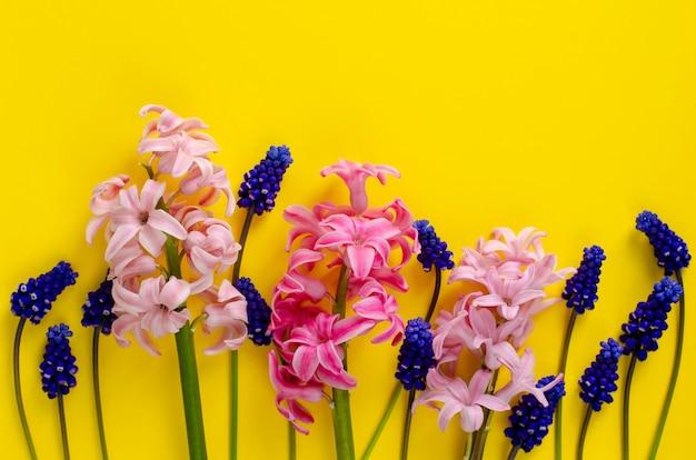 Jacinto rosa y muscari azul sobre amarillo.