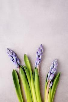 Jacintos púrpuras azules frescos con gotas de agua, espacio de copia