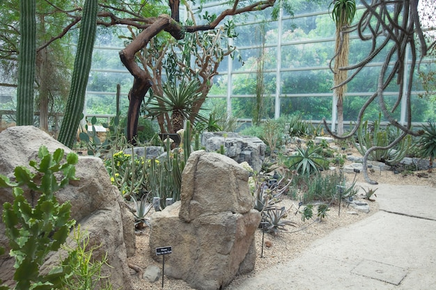 Jardín botánico. invernadero con cactus en un jardín botánico.