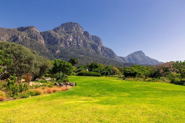 Jardín botánico kirstenbosch césped y vistas a las montañas en ciudad del cabo, sudáfrica