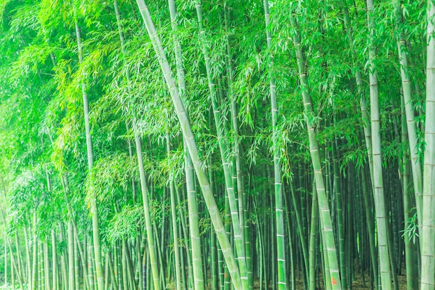 Jardín decoración china japanese forest