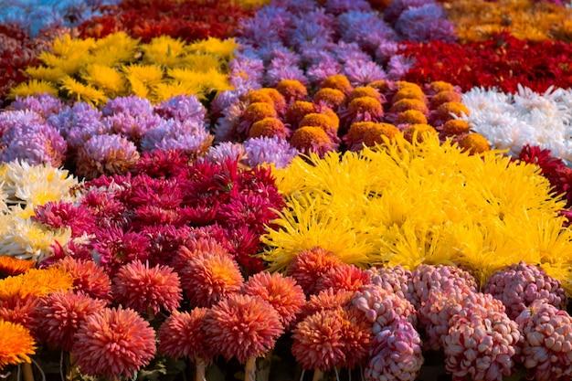 Jardín con flores coloridas