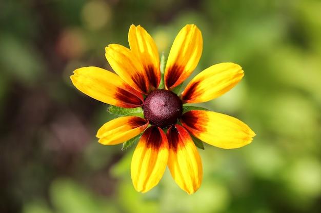 Jardín de flores gerbera margarita primavera verano