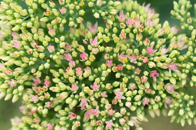 Jardín de flores y ramos de flores, primer plano