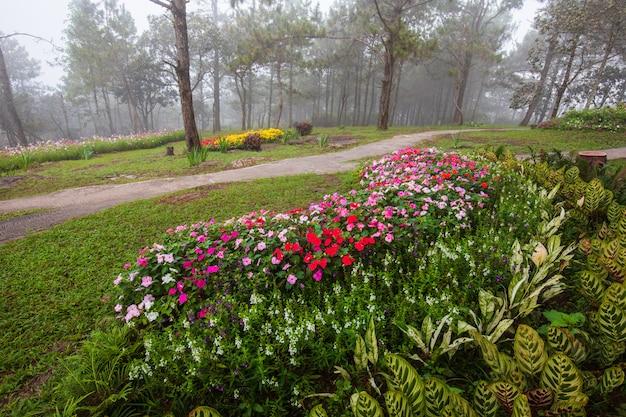 Jardín hermoso en el valle en la provincia de loei, tailandia.