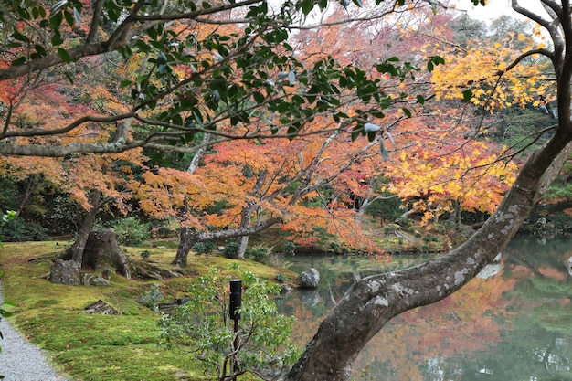 El jardín en kyoto en japón