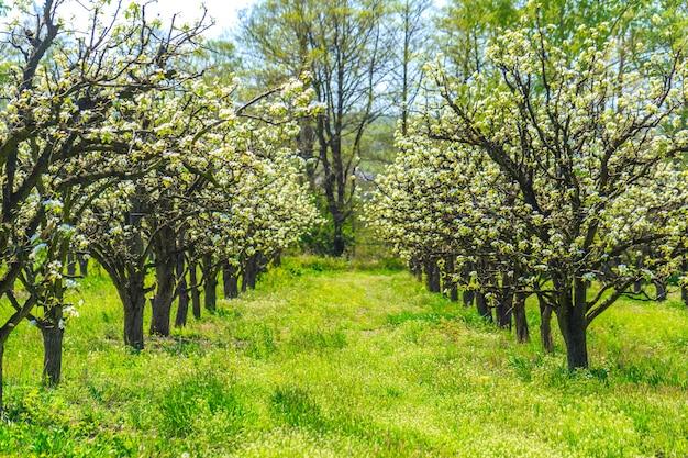 Jardín de manzanas con árboles florecientes