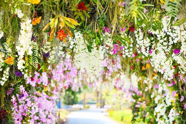 Jardín de orquídeas / hermosa flor de plantas tropicales en el parque de primavera verano