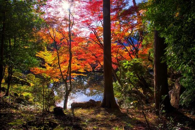 Jardín de otoño daigoji en kioto