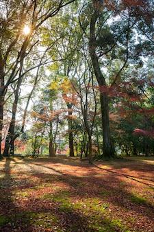 Jardin de otoño