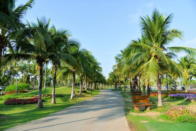 El jardín de palmeras y la flor de primavera en el camino del parque con palmeras en crecimiento y cielo azul
