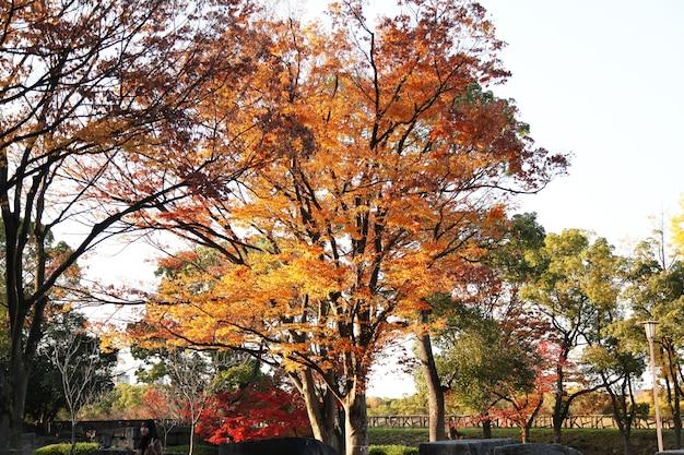 El jardín en el parque de osaka en japón