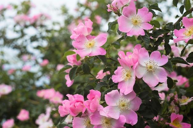Jardín de rosas sobre verde.